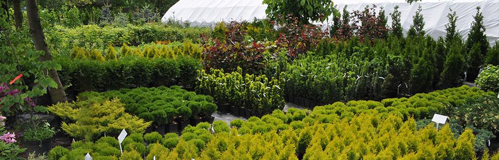 Duży wybór gatunków roślin